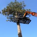 hazard-tree-removal-spokane