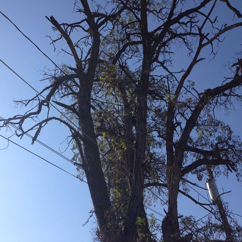 spokane-contractor-hazard-tree-removal-company